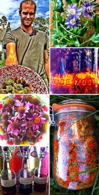homestead herbalism curriculum